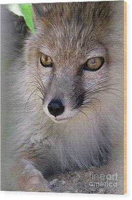 Wood Print featuring the photograph Corsac Fox- Vulpes Corsac 03 by Ausra Huntington nee Paulauskaite