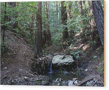 Corte Madera Creek Wood Print by Ben Upham III