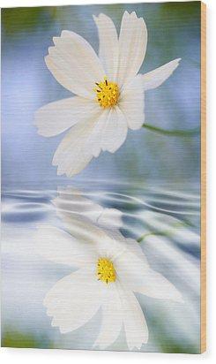 Cosmea Flower - Reflection In Water Wood Print by Silke Magino