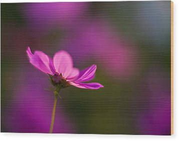 Cosmo Impression Wood Print by Mike Reid