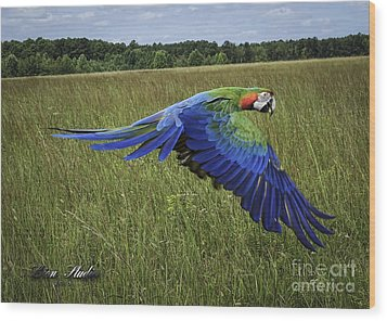 Cosmo In Flight Wood Print by Melissa Messick