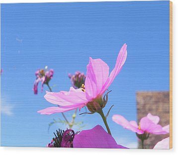 Cosmos Wood Print by Adrienne Petterson