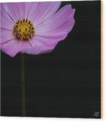 Wood Print featuring the photograph Cosmos On Black by Lisa Knechtel