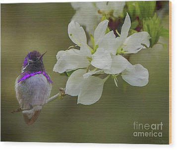 Costas Hummingbird On An Anacacho Orchid Branch Wood Print