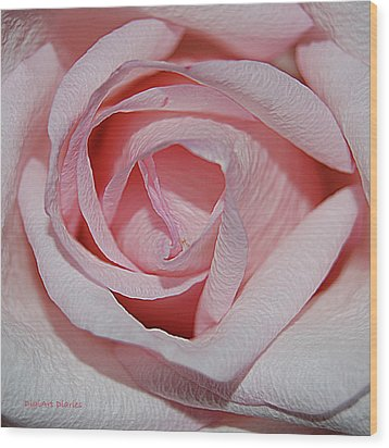Cotton Candy Rose Wood Print by DigiArt Diaries by Vicky B Fuller