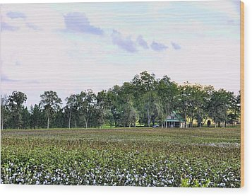 Wood Print featuring the photograph Cotton Field In Georgia by Jan Amiss Photography