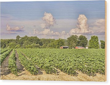Wood Print featuring the photograph Cotton Hasn't Flowered Yet by Jan Amiss Photography