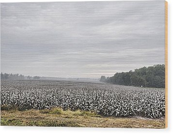 Wood Print featuring the photograph Cotton Under The Mist by Jan Amiss Photography