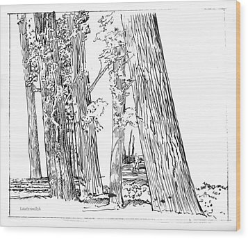 Cotton Woods Creve Coeur Path Wood Print by John Lautermilch
