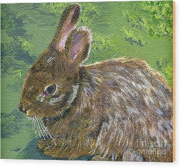 Cottontail Wood Print by Lynne Reichhart