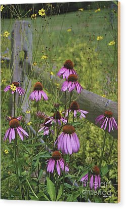 Country Coneflowers Wood Print by Dodie Ulery