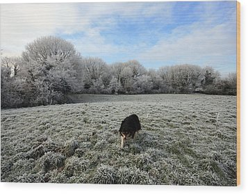 County Clare Lassie Wood Print by John Quinn