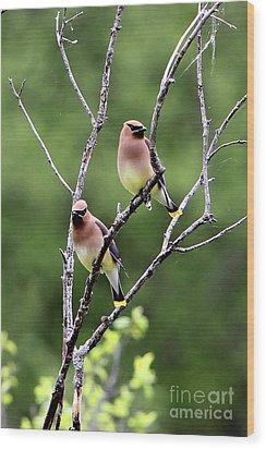 Couple Cedar Waxwing Wood Print by Marle Nopardi