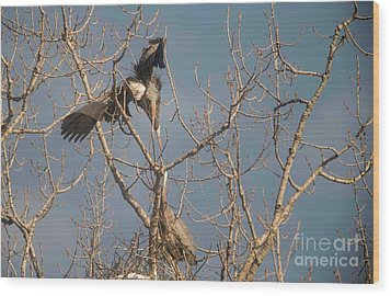 Wood Print featuring the photograph Courtship Ritual Of The Great Blue Heron by David Bearden