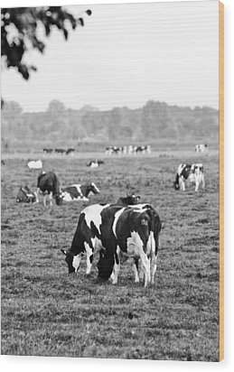 Cow 188 Wood Print by Edward Myers