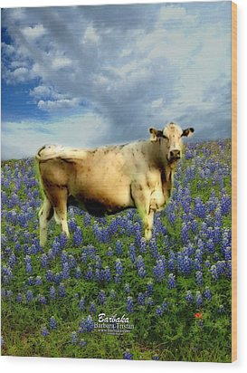 Wood Print featuring the photograph Cow And Bluebonnets by Barbara Tristan