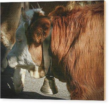 Cow Beautiful - Wood Print