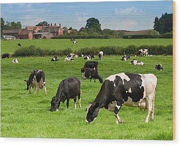 Cow Landscape Wood Print by Amanda Elwell