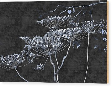 Cow Parsnip Wood Print