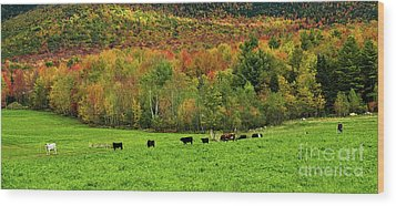 Cow Pasture In Fall Wood Print