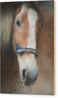 Wood Print featuring the photograph Cow Pony by Robin-Lee Vieira