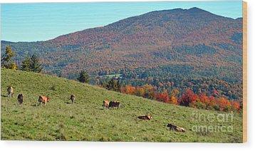 Cows Enjoying Vermont Autumn Wood Print by Catherine Sherman