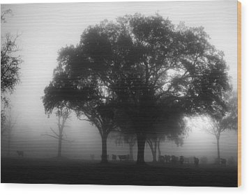 Cows In The Mist Wood Print by David Mcchesney