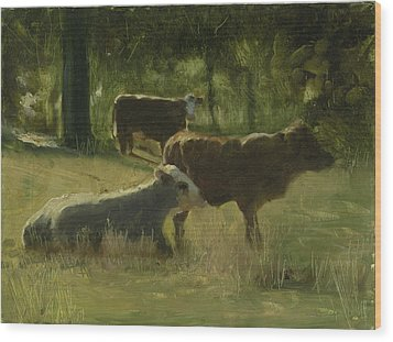 Cows In The Sun Wood Print by John Reynolds