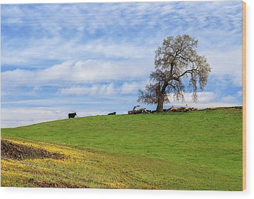 Wood Print featuring the photograph Cows On A Spring Hill by James Eddy