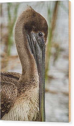 Coy Pelican Wood Print by Jean Noren
