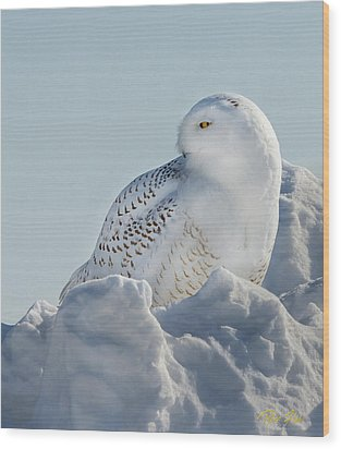 Wood Print featuring the photograph Coy Snowy Owl by Rikk Flohr