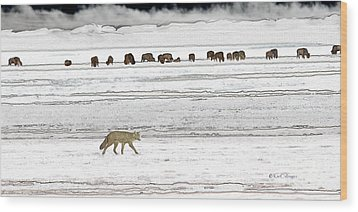 Wood Print featuring the digital art Coyote And Bison by Kae Cheatham