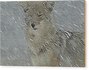 Coyote In Winter Wood Print by Errol Savage