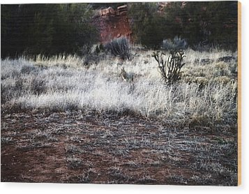 Wood Print featuring the photograph Coyote by Joseph Frank Baraba