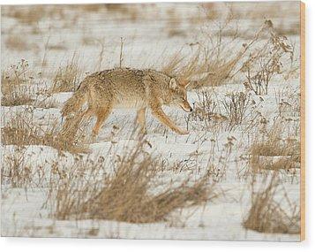 Coyote Stalk Wood Print