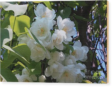 Crab Apple Blossoms 3 Wood Print by Marjorie Imbeau