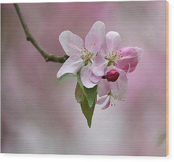 Crab Apple Blossoms Wood Print by Ann Bridges