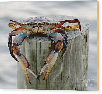 Wood Print featuring the photograph Crab Hanging Out by Luana K Perez