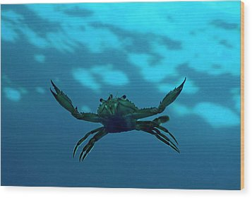 Crab Swimming In The Blue Water Wood Print by Sami Sarkis