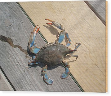 Wood Print featuring the photograph Crabby Blue by Beth Akerman