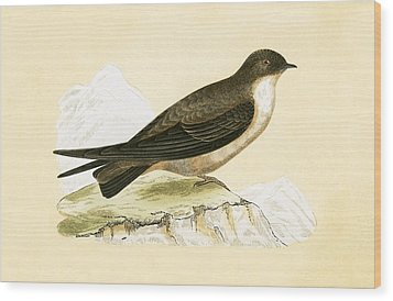 Crag Swallow Wood Print by English School