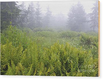 Cranberry Glades Early Morning Wood Print by Thomas R Fletcher