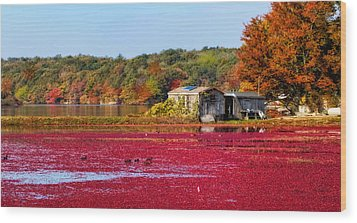 Cranberry Juice Wood Print by Gina Cormier