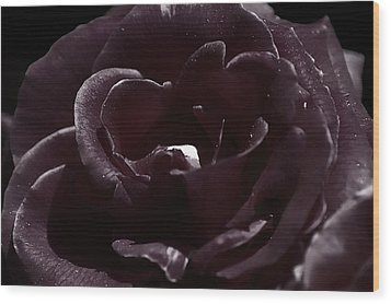 Cranberry Rose Wood Print by Clayton Bruster