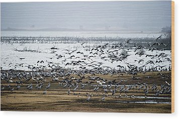 Wood Print featuring the photograph Crane Dance by Torbjorn Swenelius