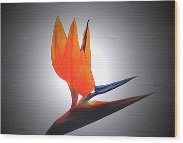 Crane Flower Portrait Wood Print by Terence Davis