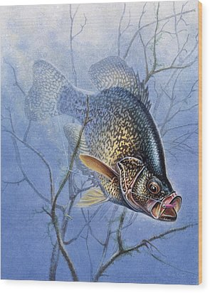 Crappie Cover Tangle Wood Print by JQ Licensing