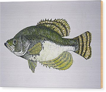 Crappie Fish Of Usa  Wood Print by Don Seago