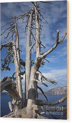 Crater Lake Tree Wood Print by Carol Groenen
