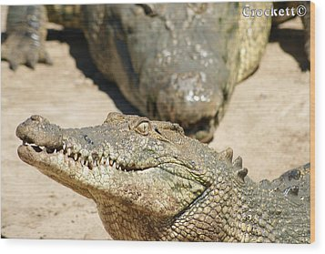 Wood Print featuring the photograph Crazy Saltwater Crocodile by Gary Crockett